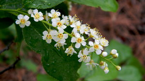 Stock De Fotos Gratis Flores Silvestres Columbine June 23