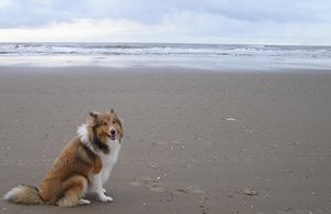 Dog on the beach: