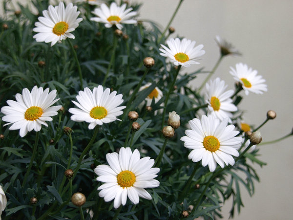 Free Stock Photos Rgbstock Free Stock Images Spring Flowers