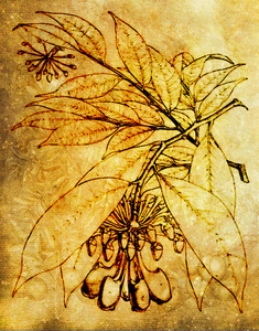 Botanical Drawing: Botanical drawing was used for a interesting texture