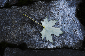 Stones: stone and leaf