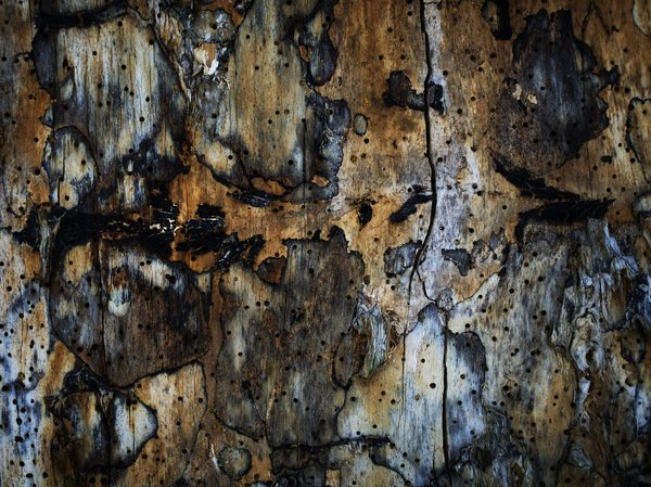 wood: abstract