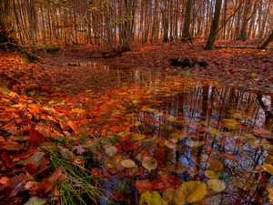 Water and forest - HDR: The forest bed with a small pondstream filled with autumn colored leafs. The picture is HDR.