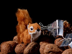 Christmas squirrel: A squirrel between wall nuts and gifts