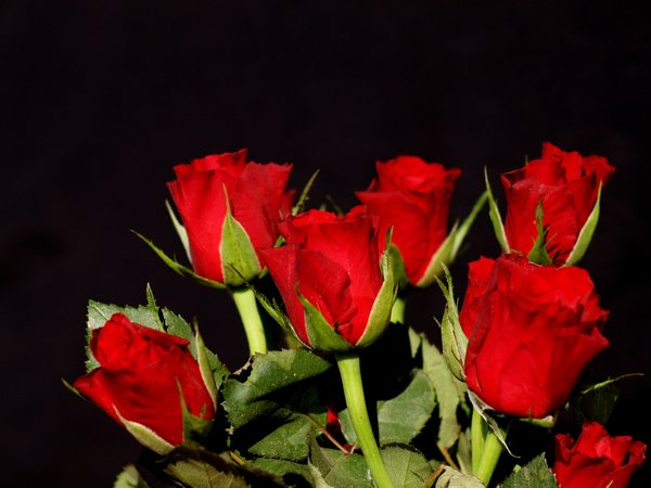 Free Stock Photos Rgbstock Free Stock Images A Bouquet Of Red