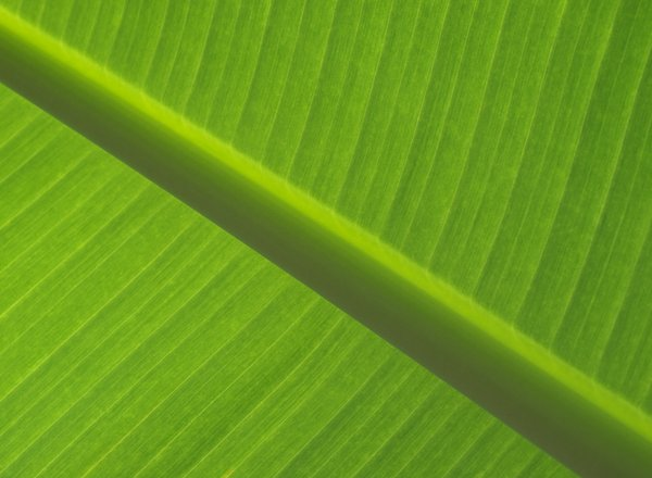Texture - Leaf: Leaf from various tropic plants