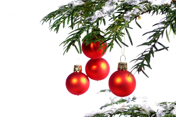 Christmas tree with ornaments: Christmas tree with four red decoration balls and snow on the branches. White background.