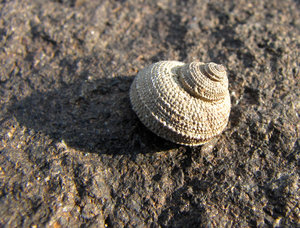 Shell on the Rock: Shell on the Rock