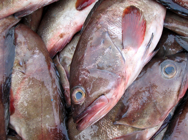 Grouper Fish: a grouper at the local market