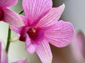 Orchid Series 5: Snapshots of pretty orchids