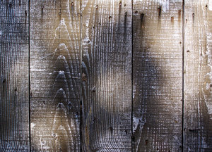 Distressed wood in dappled lig: The paint on this wall of a farm outbuilding has deteriorated; weathered wood.