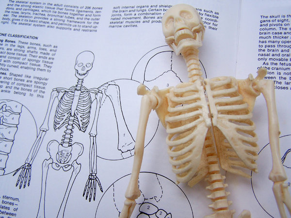 Skeleton Study 1: Plastic skeleton model on book page.