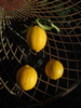 Three lemons on a mesh table: Close up shot of three lemons arranged on a table