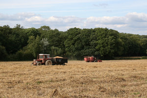 Harvest: Harvesting wheat in West Sussex, England.