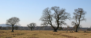 Characterful trees: Trees of diverse shapes and sizes in West Sussex, England, in spring.