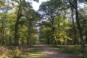 Autumn forest trail: A bridleway in the New Forest, Hampshire, England, in autumn.