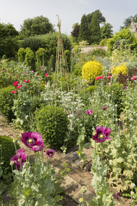 Herb and vegetable garden: A herb and vegetable garden in Wiltshire, England.