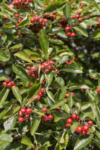 Free stock photos - Rgbstock - Free stock images | Autumn