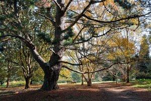 Parkland in autumn: A woodland park in autumn in Surrey, England.