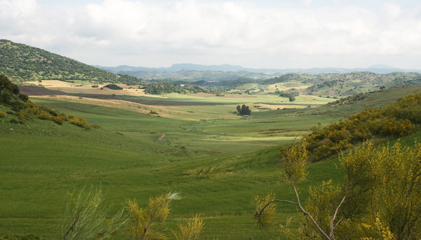 Green valley: An arable valley in Andalucia, Spain.