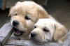 Cute puppies: just born puppies... they are so adorable...