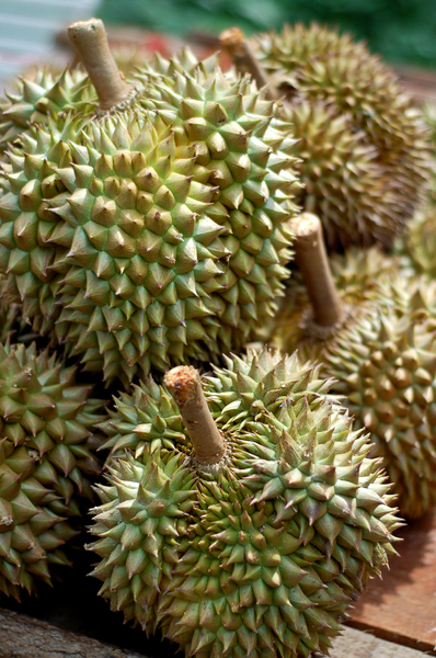 THE KING OF FRUITS: Durian - Tropical Fruit