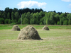 Hay stack: A hay stack in the field.