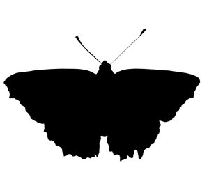 A butterfly: A butterfly silhouette.Please comment this shot or mail me if you found it useful. Just to let me know!I would be extremely happy to see the final work even if you think it is nothing special! For me it is (and for my portfolio).
