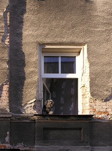 Dog in the window: A dog in the window in Ladek Zdroj, Poland.