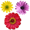 Isolated Flowers: Isolated flower clipart.