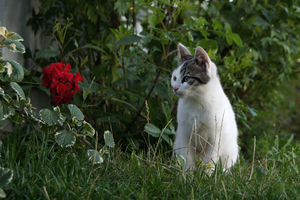 happy cat 2: cat looking at red flower