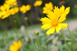 Spring now!: Yellow flower on the countryside at the start of spring