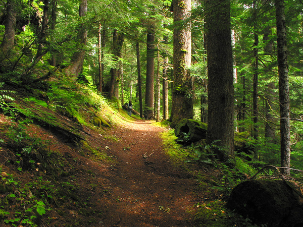 Forest Path I: Deep in the Pacific Northwest.