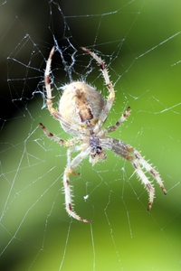 Spider 1: Spider and spider web in natural environment.