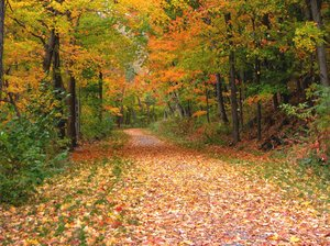 Path From Autumn: Leads to Winter! 