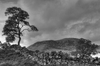 Scottish landscape in b and w: A Scots pine tree silhouetted against a nice sky.