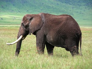 elephant 1: photo taken in Tanzania