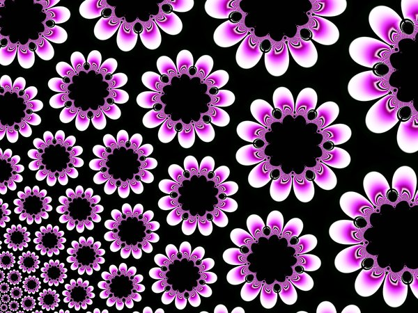 Fractal Flower: Fractal Flower.My other fractals:http://www.sxc.hu/browse. ..