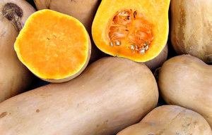 butternut pumpkins: various shapes and sizes of butternut pumpkins - squashes