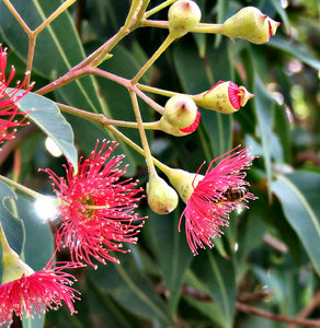 Free stock photos - Rgbstock - Free stock images | red gumtree