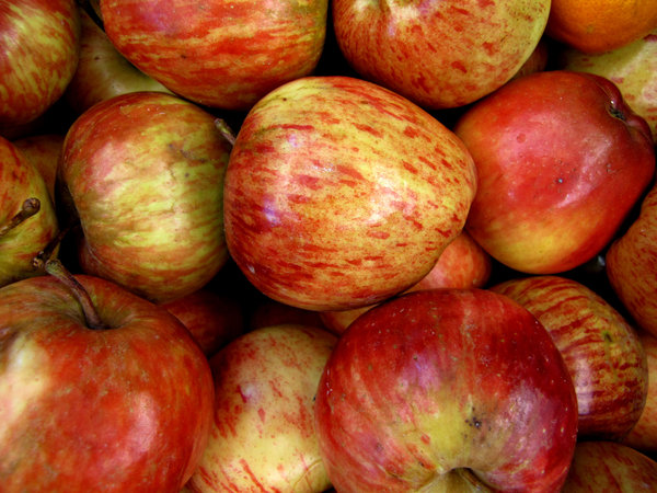 apples: a variety of eating apples
