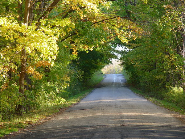 Dirt Road in Autumn: Autumn foliage forming an archway over dirt road