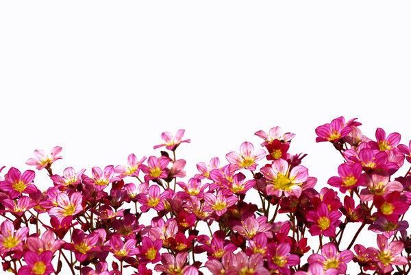 Kostenlose Stock Fotos Rgbstock Kostenlose Bilder Flower