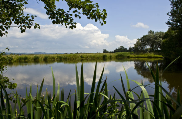 Pilling Pond: Pilling Pond in summer (2009).  Location: Lancashire, UK.