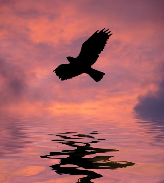 Flight Over Water 2: Bird silhouette against a colourful sky, reflected in water. Graphic. Bird shape courtesy of Obsidian Dawn. None of my images may be redistributed without my express permission.