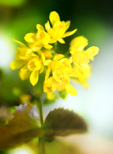 Free Stock Photos Rgbstock Free Stock Images Yellow Flowers