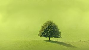 Solitaire tree on a green hill: A green solitaire tree on  a hillside