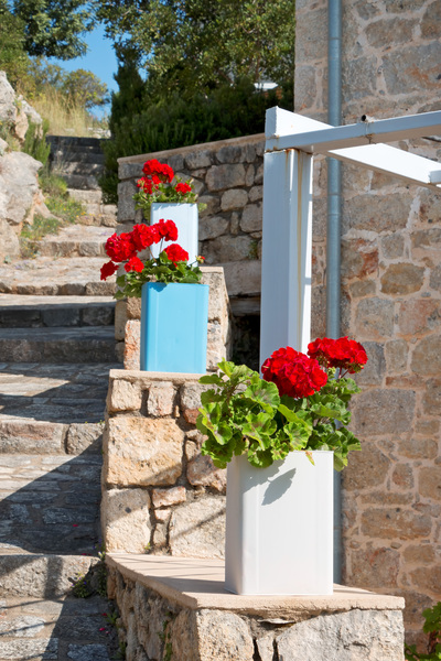 Flower pots by steps