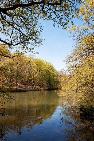 Woodland pond in spring