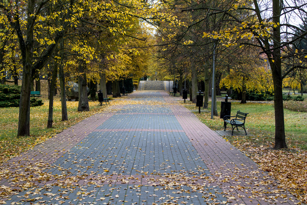 The alley in the park